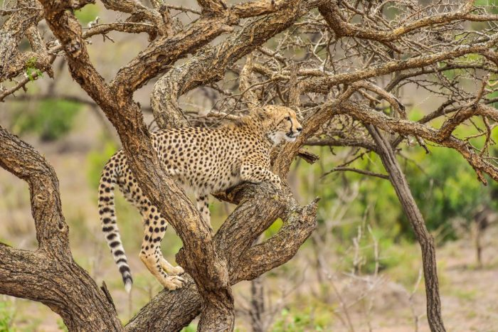 Nick Walton encounters two remarkably different landscapes on a safari at South Africa's acclaimed Phinda Game Reserve.