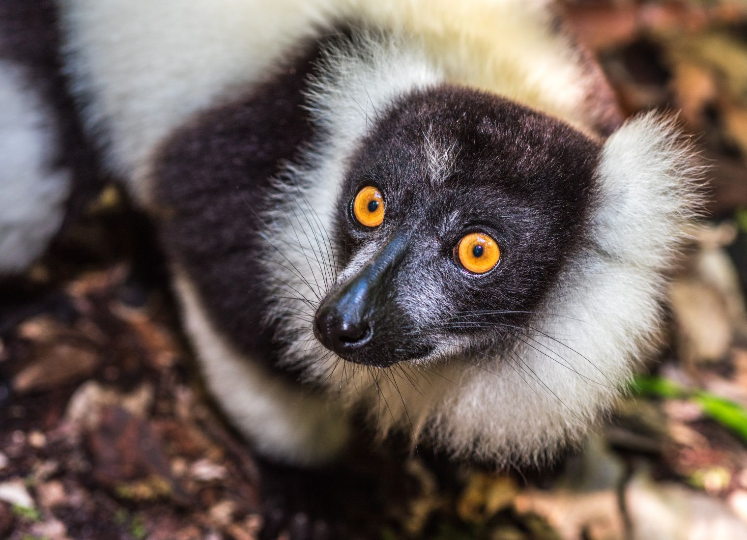 Over the past 17 years, the Anjajavy le Lodge has been contributing to the protection of the biodiversity and indigenous communities of Anjajavy, Madagascar, through luxury eco-tourism.